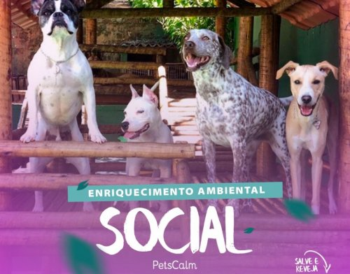 Enriquecimento Ambiental Social